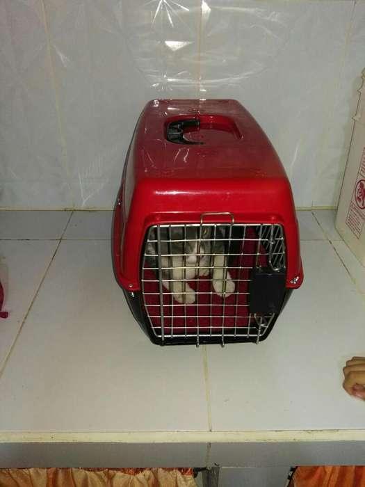 en Oferta <strong>jaula</strong> para Animalitos