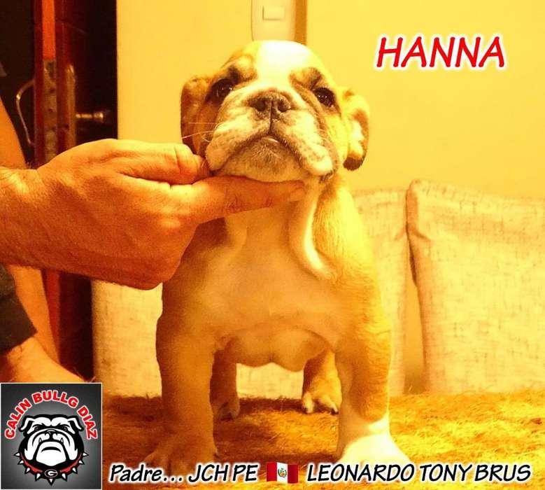 Bulldog Ingles Pedigree Dorado 1000