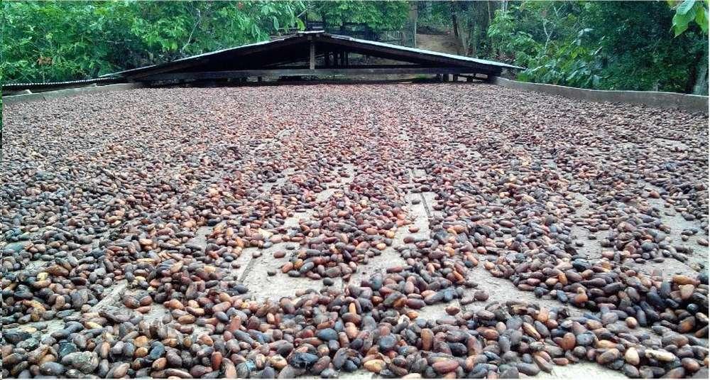 Vendo O Permuto Finca Cacaotera