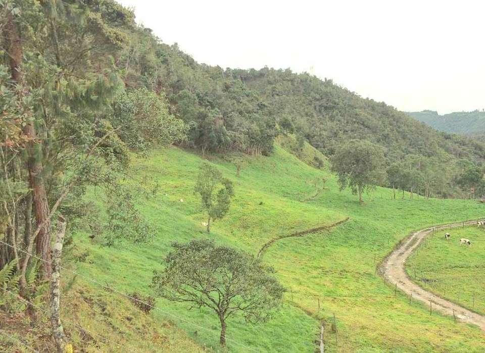 <strong>propiedad</strong> ganadera hacienda 43 hectareas Cuenca Ecuador