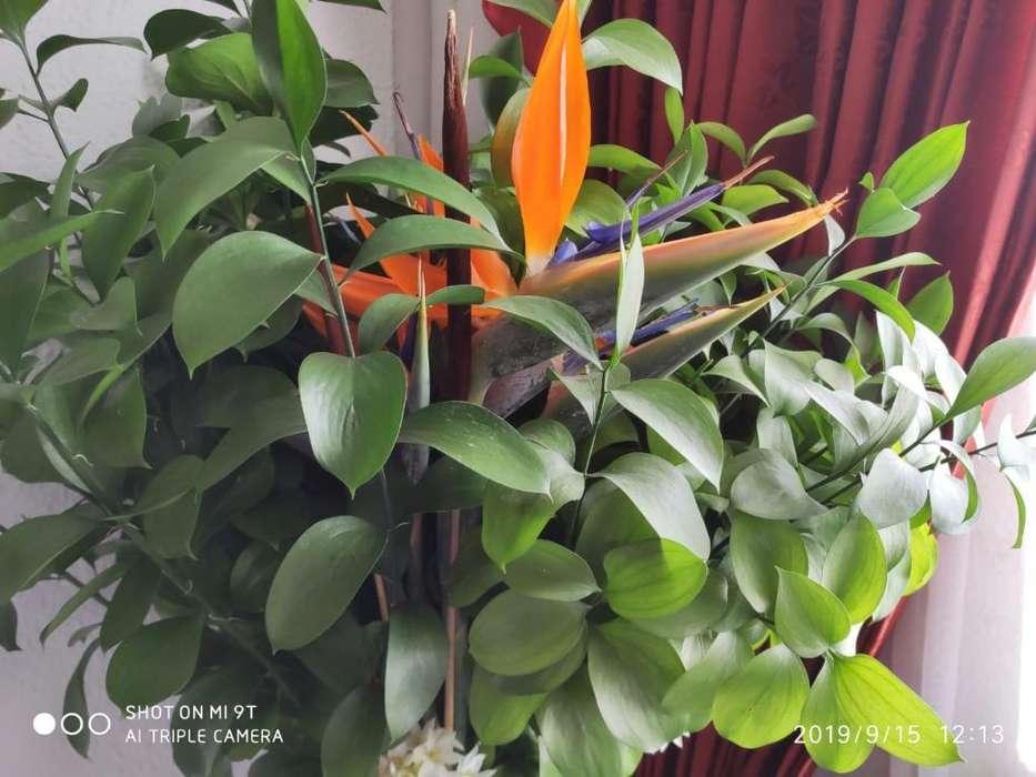Venta de Flores Exóticas Tipo Exportació