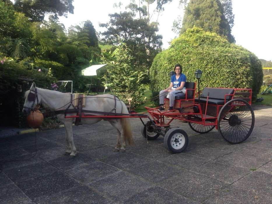 carroza de tracción animal