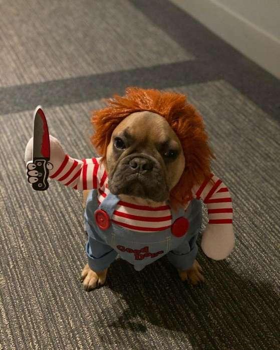 disfraz mascotas chuki chuky muñeco diabolico chistoso perros y gatos