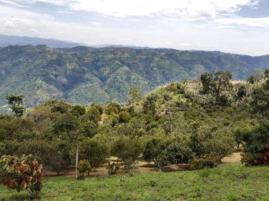 Vendo Finca en Rionegro