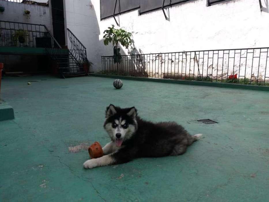 HOSPEDAJE CANINO HOTEL CANINO cuidamos a su mascota