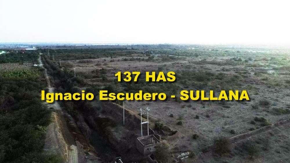 OCASIÓN VENDO TERRENO AGRICOLA DE 137 HAS EN SULLANA PIURA PIURA
