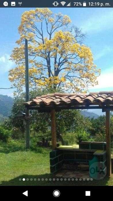 Vencambio Finca en Fredonia por El Mango