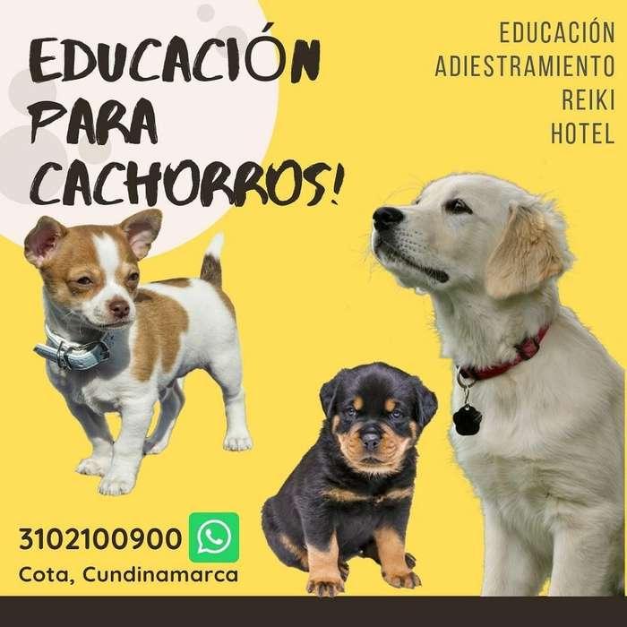 Educación para <strong>cachorro</strong>s