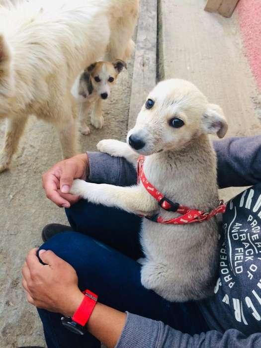 <strong>cachorro</strong>s en adopción