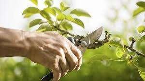 jardineria, poda con guadaña o de swingla