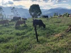 Lote Campestre Sabaneta (las Lomitas) 3000 M2 Plano