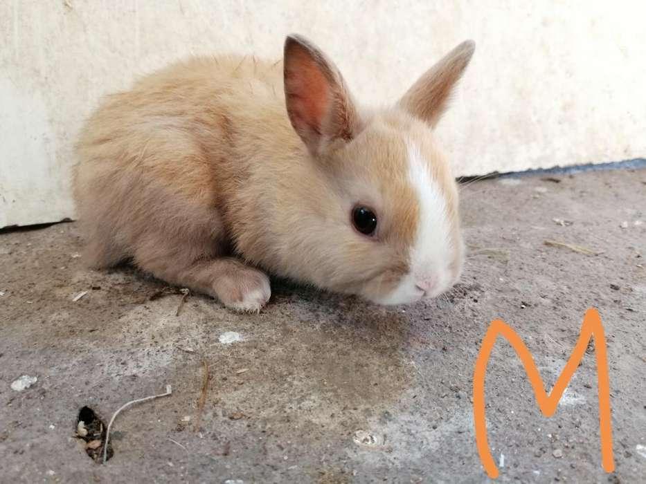 Vendo Hermosos Conejitos para Mascota