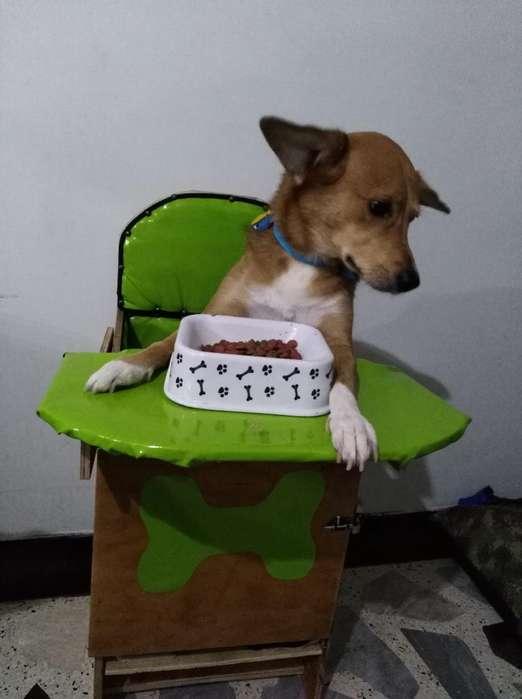 Silla para <strong>perro</strong> Bailey