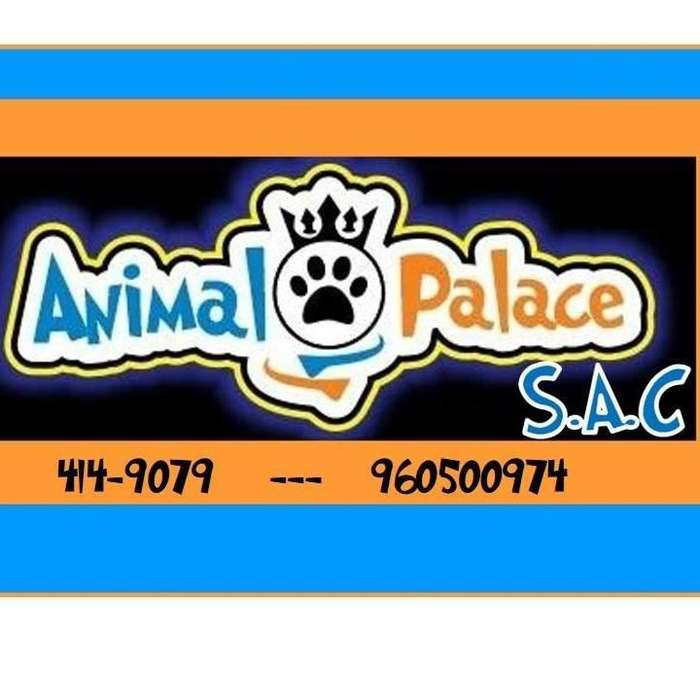 solicito sra o srta asistenta para veterinaria con sin experiencia