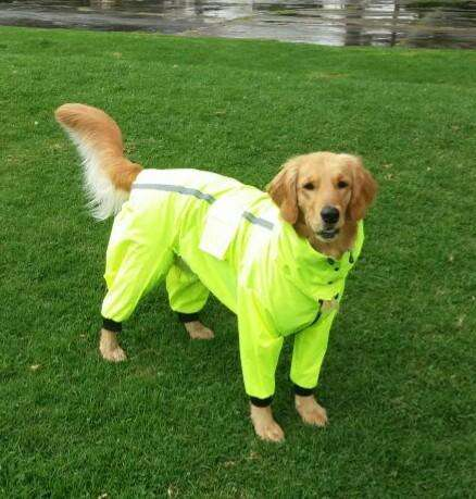 Protege a tu perro grande o pequeño con su Impermeable personalizado.