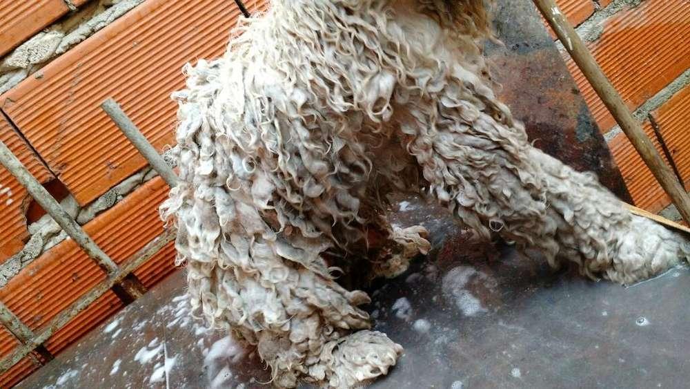 Peluqueria Canina Rosario Zona Norte