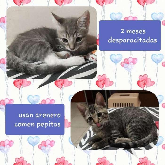 Hermosas Gatitas en <strong>adopcion</strong> Responsable