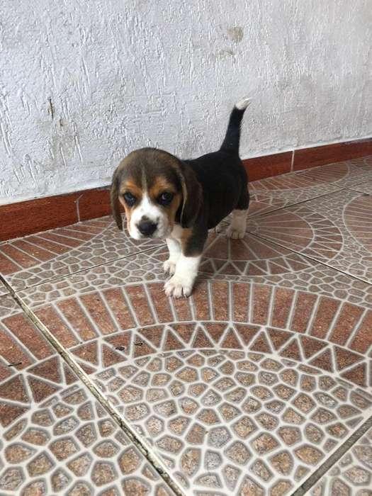 Caninos El Especialista