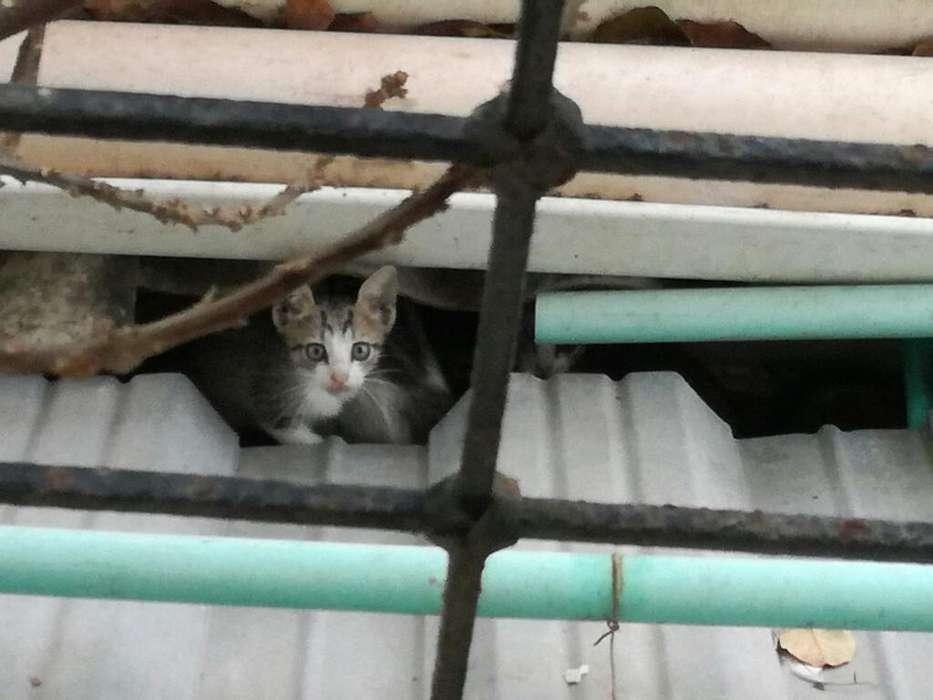 Adopcion Gatos Bebe