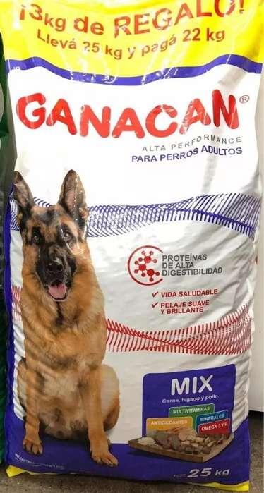 Alimento Balanceado para Perros