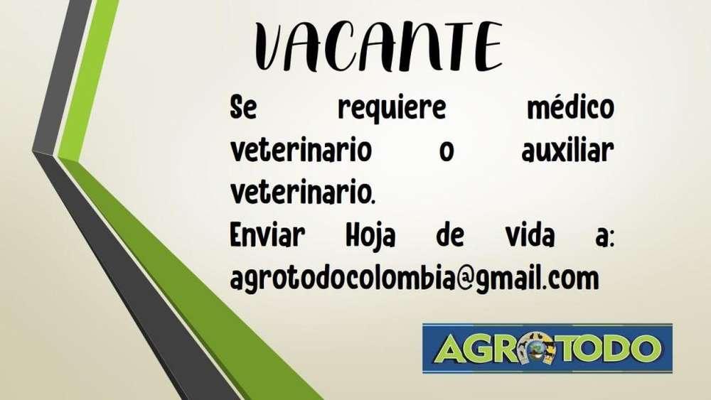 MEDICO <strong>veterinario</strong>