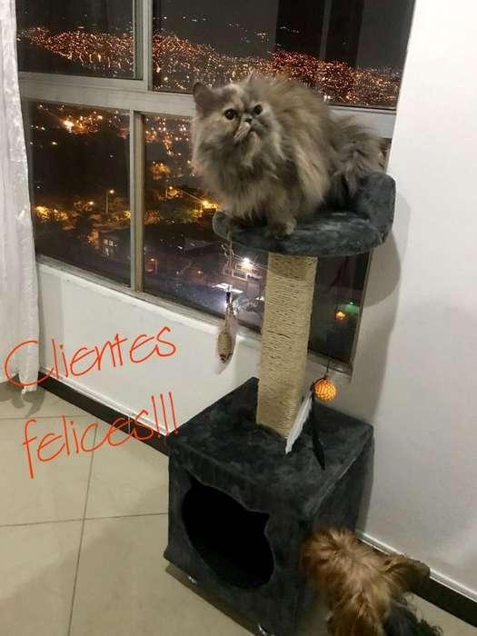 Gimnasio para <strong>gato</strong>