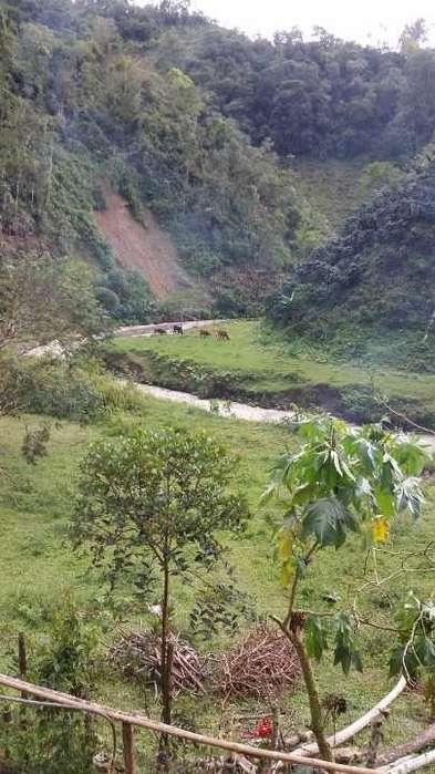 Finca en Pueblo Rico Risaralda - wasi_1244411