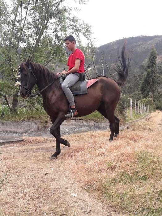 Vendo linda yegua-<strong>caballo</strong>
