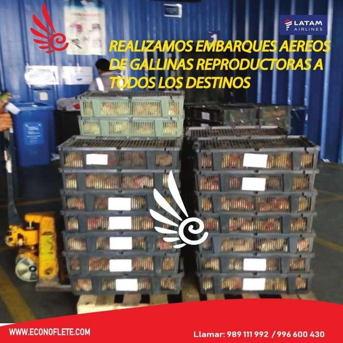 Transporte aereo de pollos bb, patos bb y pavos bb.