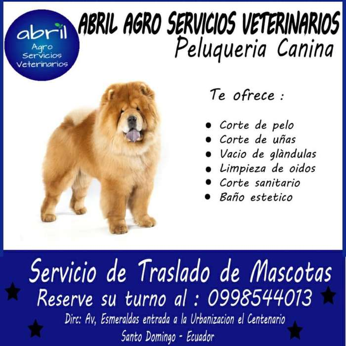 Servicio Peluqueria Canina