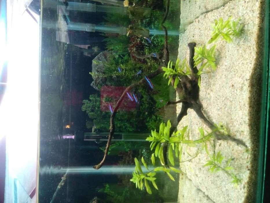 acuario completo 40x40x40 especial para plantado