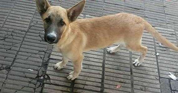 Hermoso perrito en adopción necesita un hogar y mucho amor urgente !!!!!!
