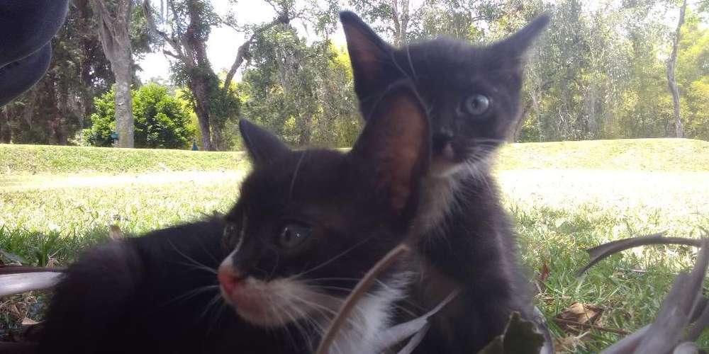 Gatos en Adopción.