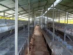 Jaulas para conejos Polivalentes, con ó sin tinglado