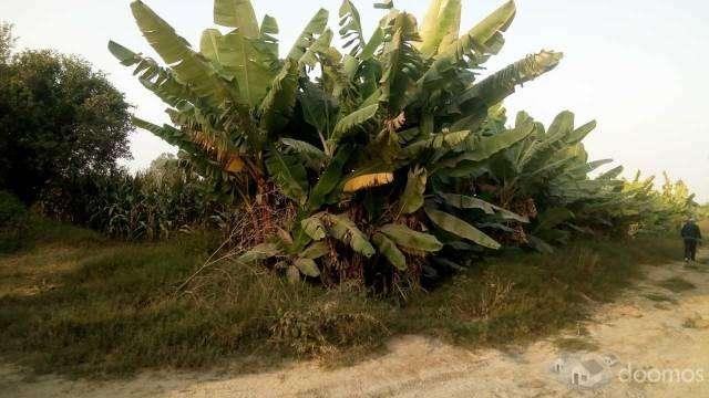 VENTA de parcela rural 2 has. en esquina - Buenaventura - El Carmen