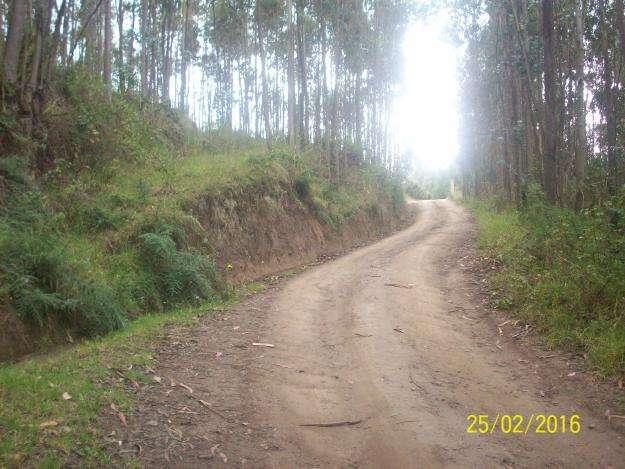 VENDO 7 HTRS. DE TERRRENO CON BOSQUE A 3 KM DEL CENTRO DE TABACUNDO Y PANAMERICANA.