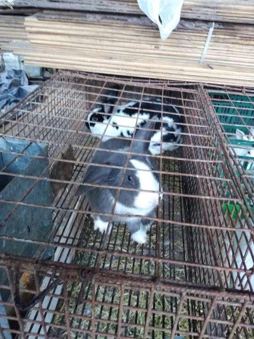 Vendo Pareja de Conejos