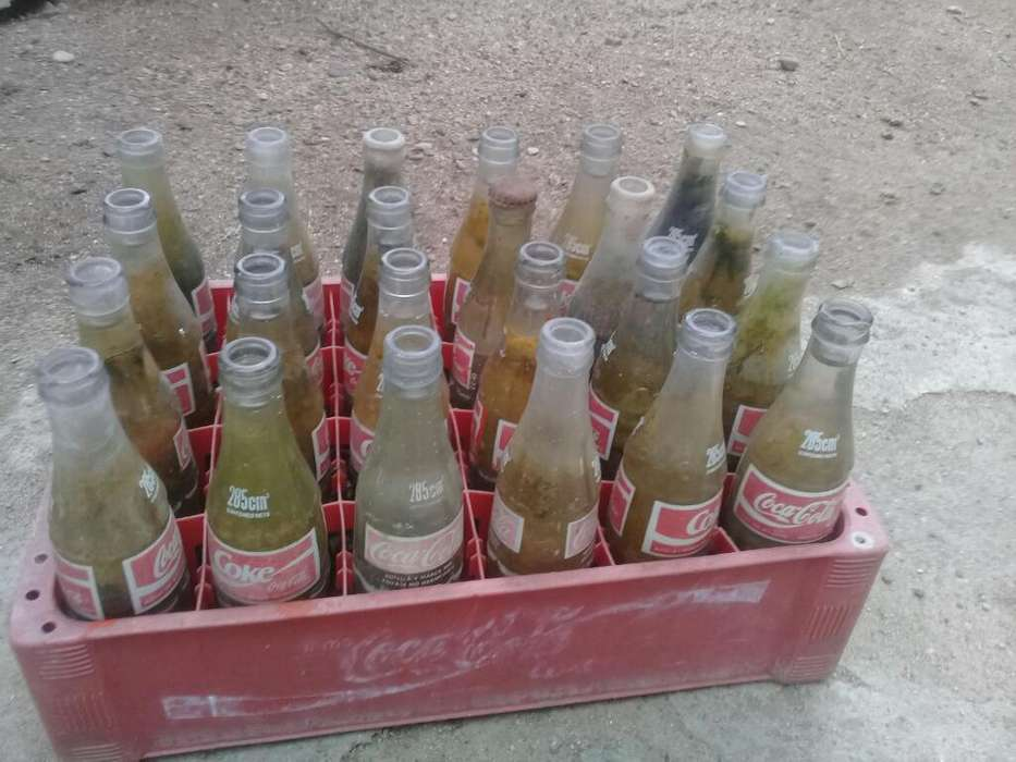 Envases de 330cc de Coca Cola