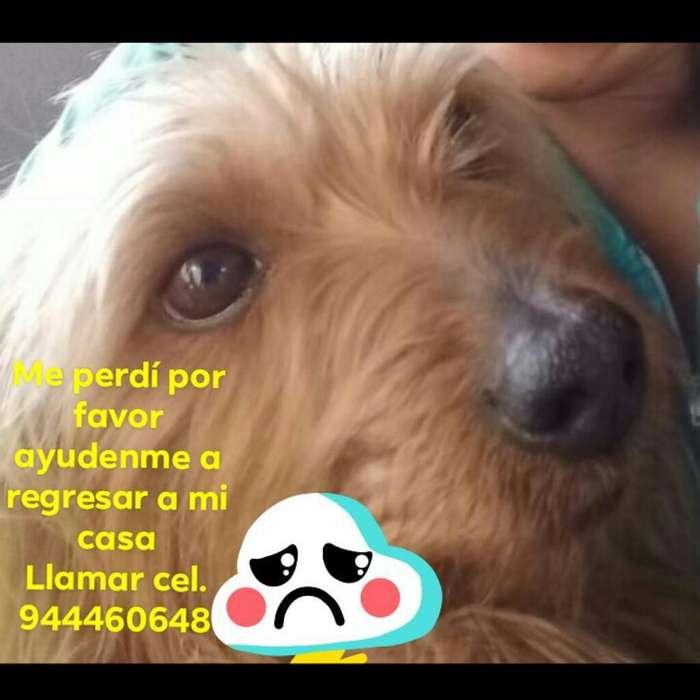 Urgente urgente Mascota Perdido