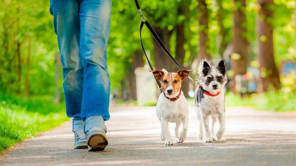 Se pasean perros en la ciudad de Cali