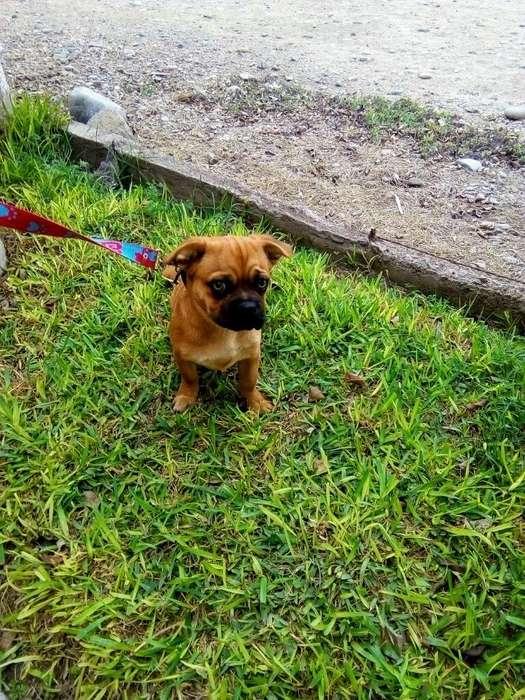 Doy en Adopción a Mi Cachorro