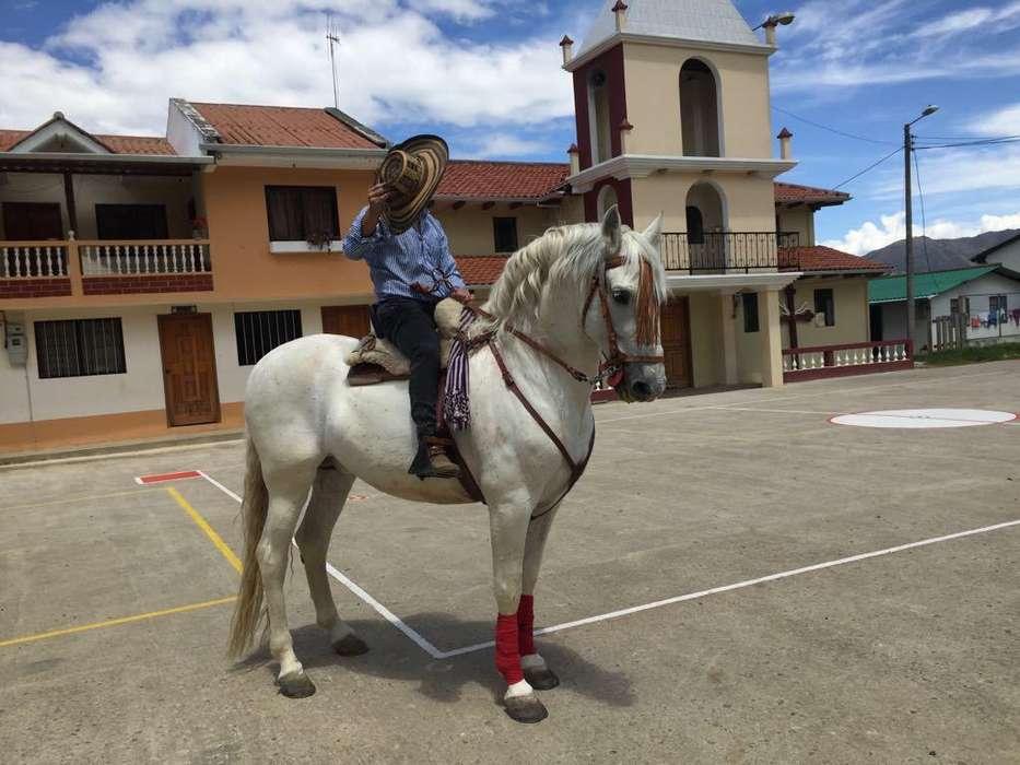 caballo español para montas 300