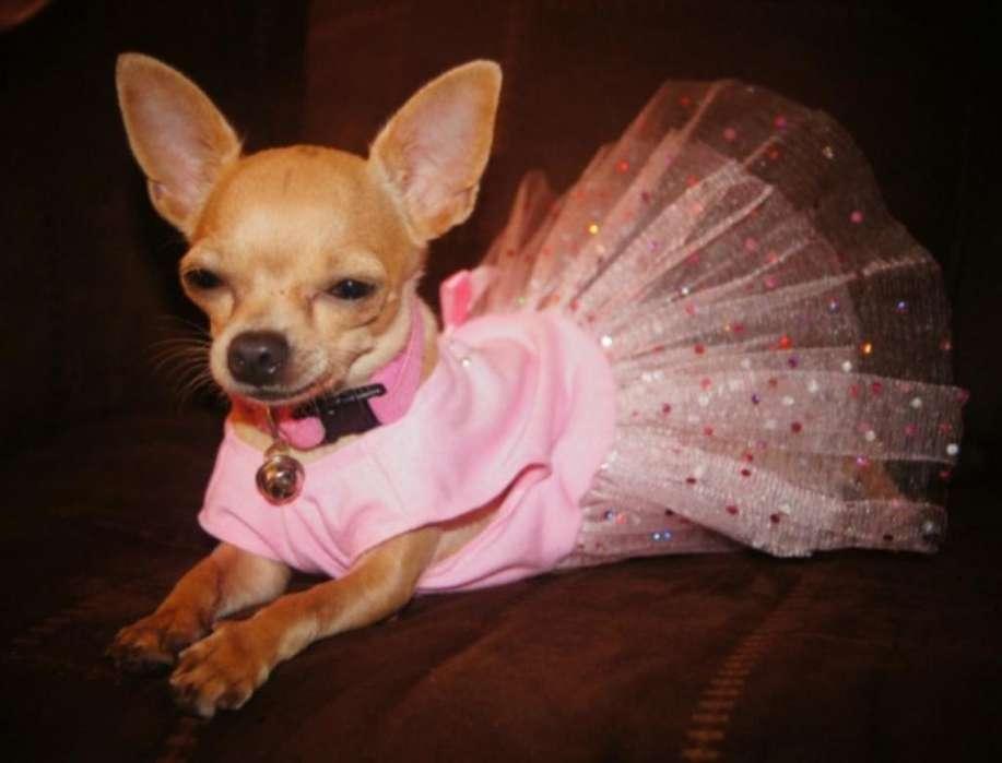 Vestido Princesa Mascota