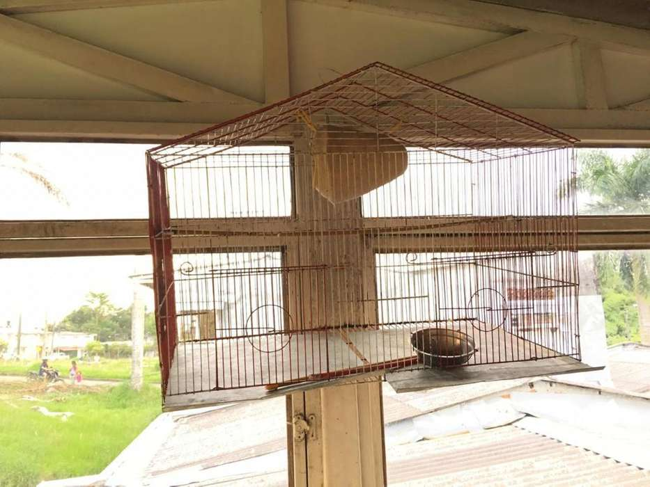 Vendo Dos Jaulas Grandes para Aves en Bu