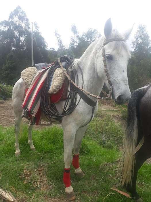 <strong>caballo</strong> de Vaqueria