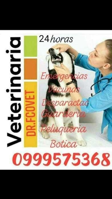 <strong>veterinario</strong> a domicilio Dr Francisco