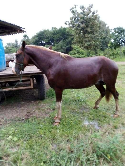 <strong>caballo</strong>s