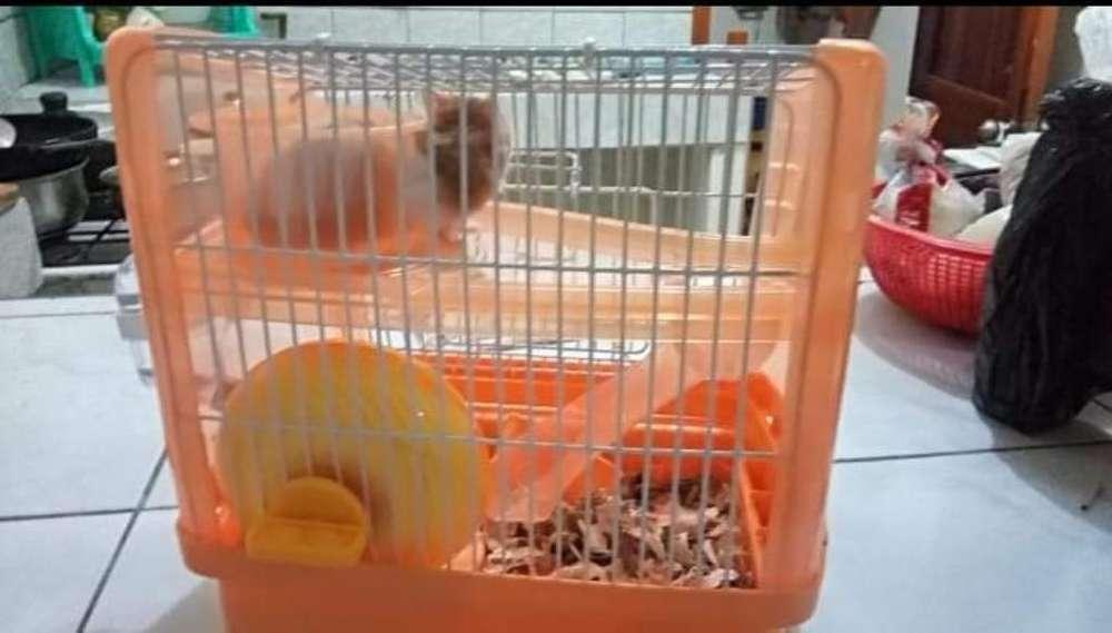Vendo <strong>jaula</strong> de Hamster