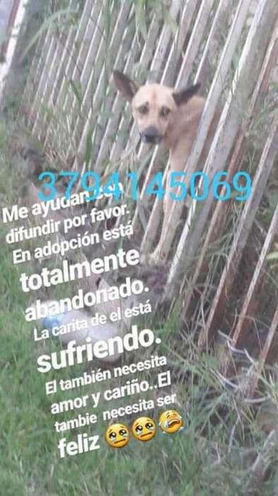 en Adopción Perro Macho