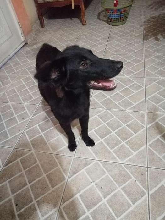 Cachorro de 8 Meses en <strong>adopcion</strong>